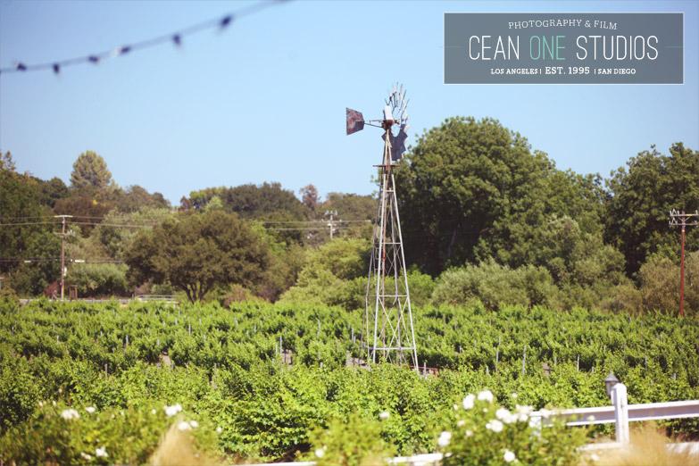 vineyard | Cean One Photography| Southern California Wedding Photographer | Lincourt Vineyards