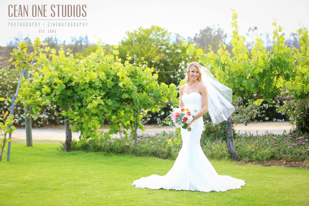 bride in vineyard | Mount Palomar Winery Photography | Cean One Wedding Photography | Southern California Wedding Photographer